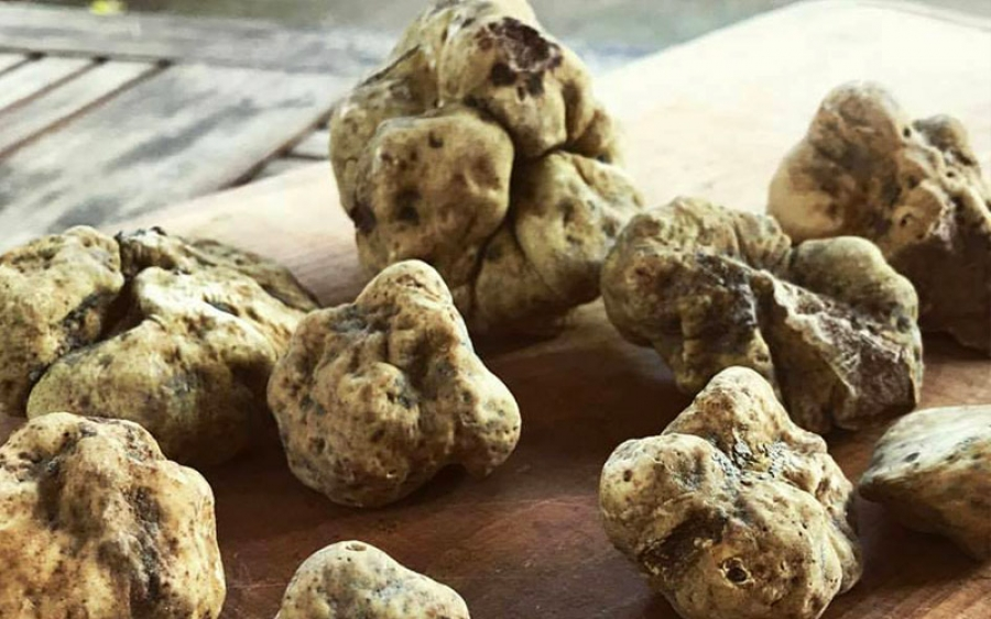 Mushrooms & Truffle Luxury Hunting
